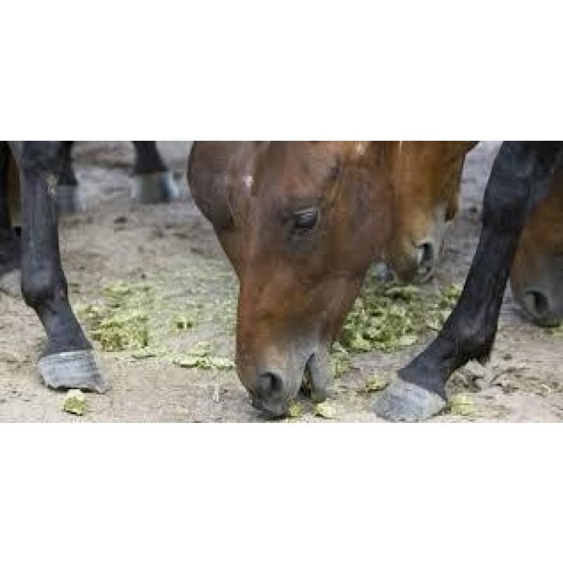 centimètre cube en chevaux
