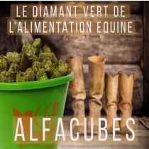 Bouchon de Luzerne pour un apport de protéines de qualité. Il joue un rôle essentiel dans la santé digestive notamment contre l'acidité gastrique, ALFA CUBES