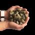 Granulés de Foin d'Auvergne, idéal pour la gestion de son élevage ou pour compléter la ration des vieux chevaux, PELLETTONE